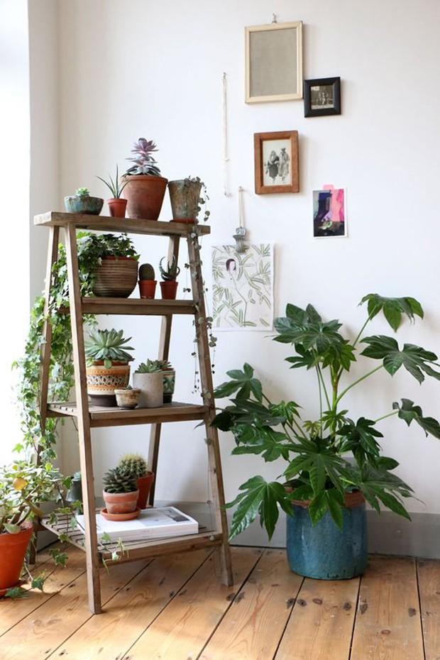 plantas-cavalete-quadro-vaso